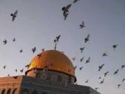 إنتهاء الاستعدادات لاستقبال شهر رمضان في الأقصى ضمن الإجراءات الوقائية