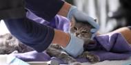 الصين: كورونا محوره القطط في بؤرة الوباء بمدينة ووهان